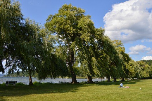 Weeping willows line the peaceful Stewart Park and Cayuga Lake in Ithaca.