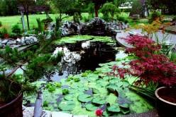 Koi Fish Pond Pumps