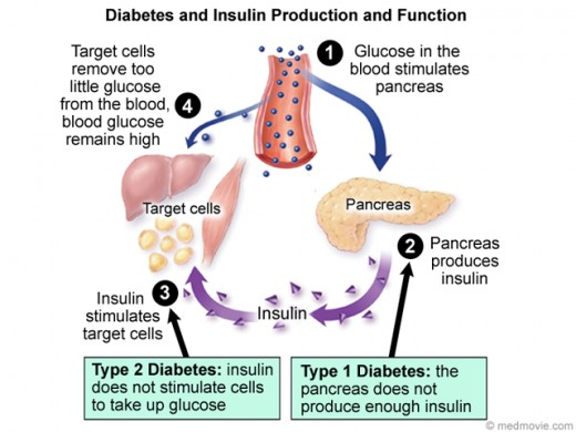 Diabetes and Insulin Production and Function