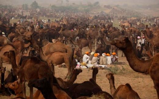 Pushkar Camel Fair - Pushkar, Rajasthan