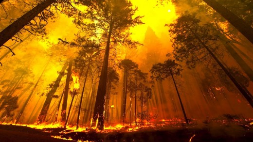 Forest Fire at Yosemite National Park, California(2013)