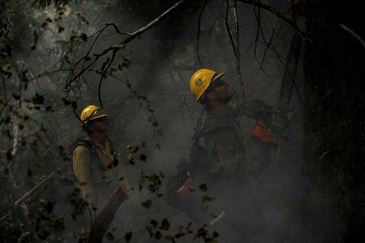 Wildfire fighters cutting down a tree using a chainsaw.