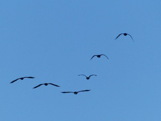 When birds fly in a uniform V or other uniform pattern, it is indicative of future success.