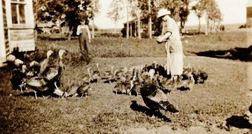 Feeding the turkeys at my great aunt and uncle's farm in North Dakota in the early 1900s.