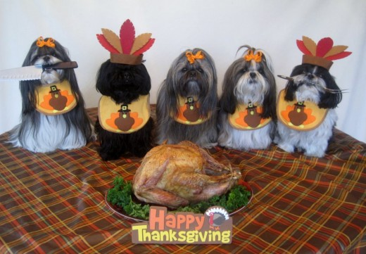Fun image: Shih Tzu doggies enjoying Thanksgiving!
