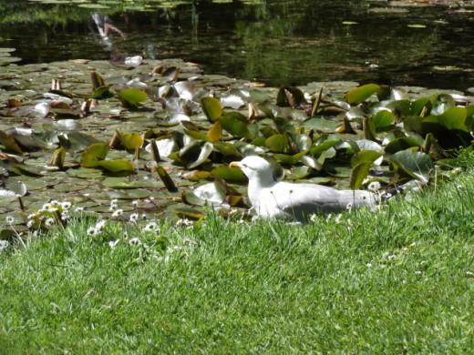 Very Naughty Seagull...