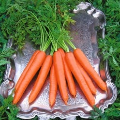 How To Grow Carrots From Seeds