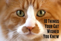 Top 10 Things Your Cat Wished You Knew