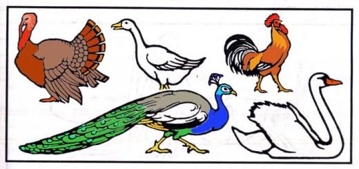 Clean Birds