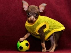 Funny little football player