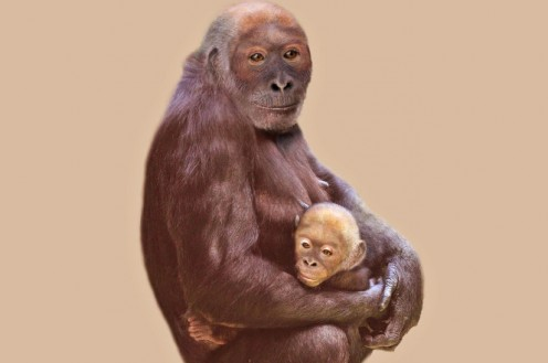 Pierolapithecus mother and child; artist unknown.