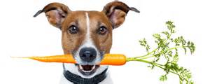 Carrots are packed with health benefits for your precious pup