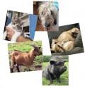 Noah's Ark Animal Rescue, Haute-Vienne France