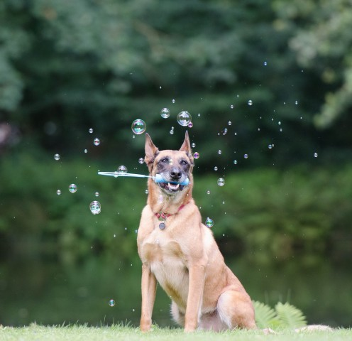 Train Your Dog: Marker Training (Clicker Training) in Operant Conditioning