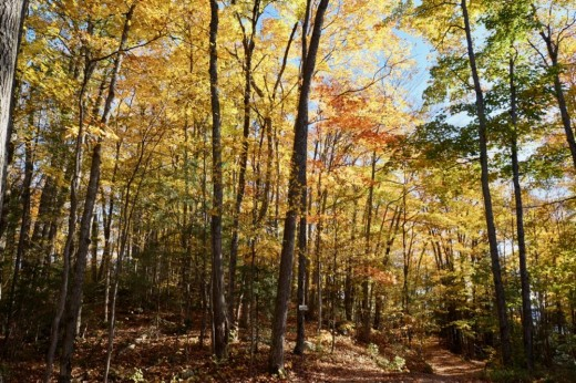 Trails of Muskoka