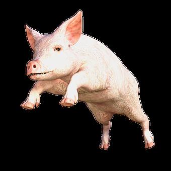 Amazing Pig - Idiom