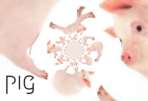 2018 Pig horoscope