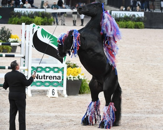 Liberty performance with Kim Barteau and his Friesian stallion, Boater.