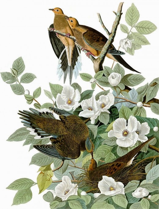 Painting by John James Audubon.