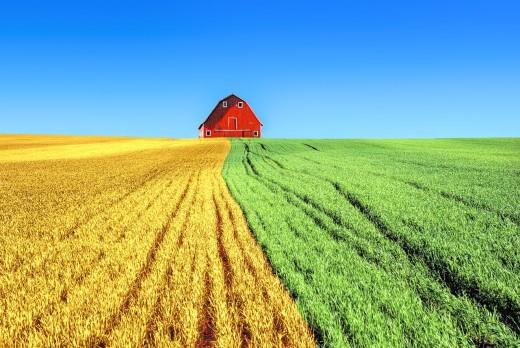 A Farm on a field. Notice the split field?