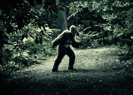 Bigfoot in North Carolina