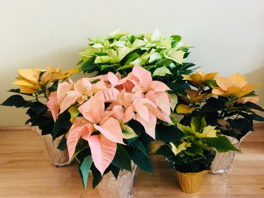 Variety display of different sizes & colors