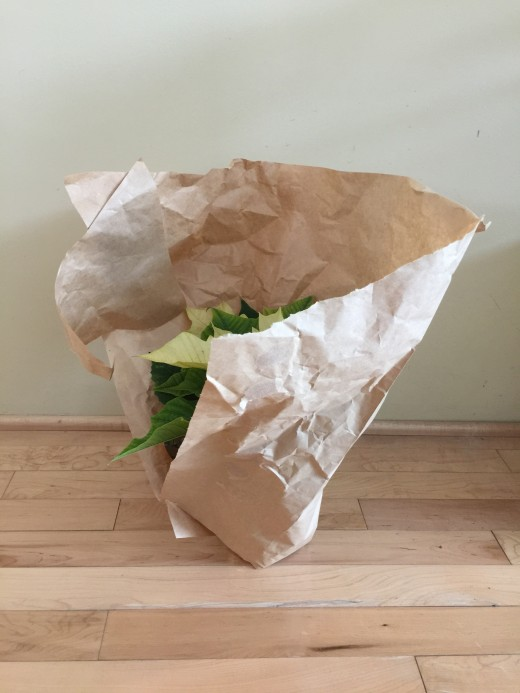 To minimize damage to your plant tear off paper or plastic protective sleeve.