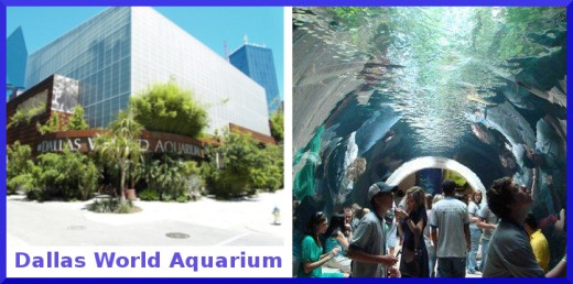 Dallas World Aquarium Offers an Underwater Wonder