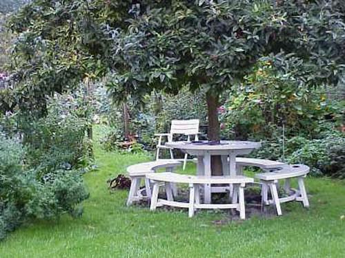 Bench around the Medlar tree