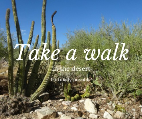 11 Great Winter Hikes in the Desert, in the Middle of Phoenix