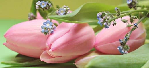 Tulips and Forget-Me-Not Flowers