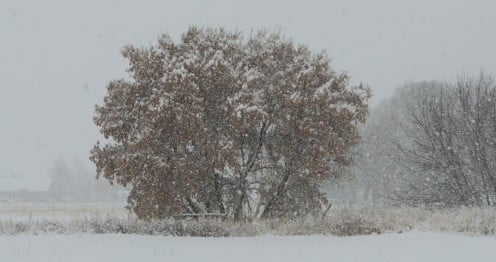 A snowstorm on the farm in the valley