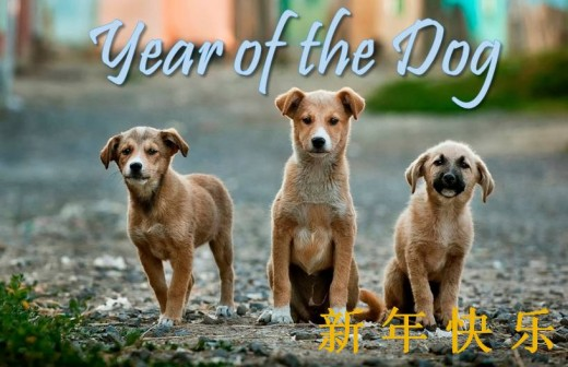 Three puppies card