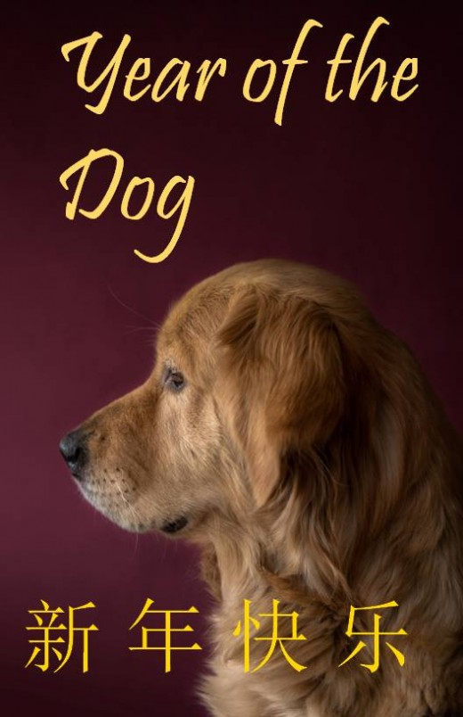 Dog with burgundy-colored background