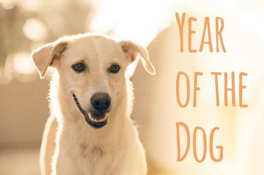 Bonus Year of the Dog card