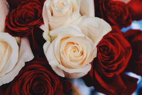 Six Ways to Preserve Roses and Other Types of Flowers