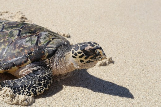 Light Pollution disrupts the behaviour of sea turtle by disorienting them.