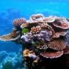 Coral Cane profile image