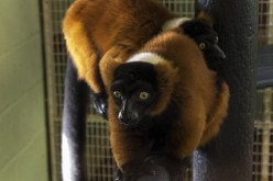 10 Exotic Pets That Are Legal In Texas