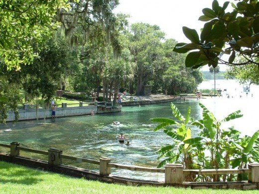 A view of Salt Springs form the picnic area.