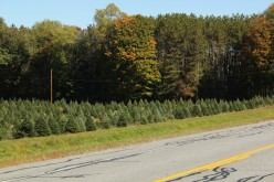 Artificial And Real Christmas Trees, The Pros And Cons Of Each, Christmas Tree Farms
