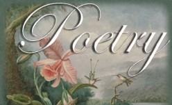 Information and Advice on Writing Poetry