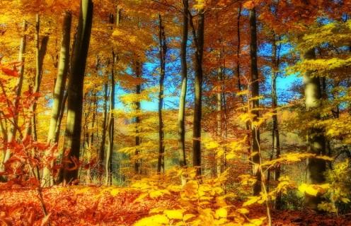 Autumn's Beautiful Nature Scenery