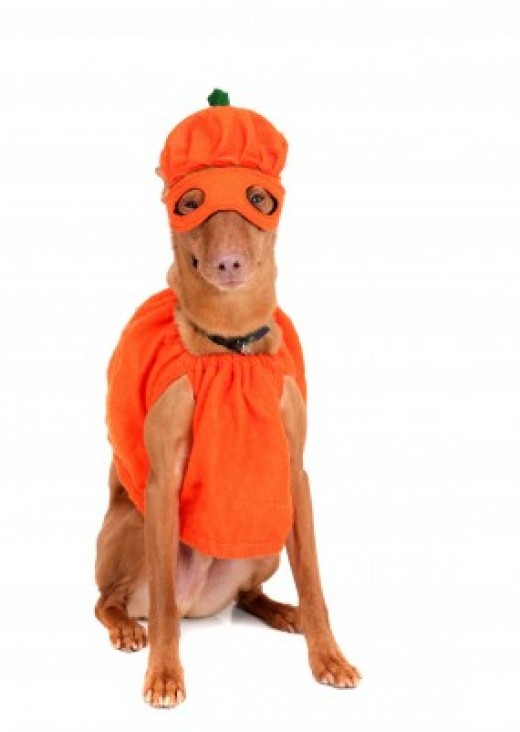 Make sure the costume you pick out for your dog or cat is safe and comfortable!