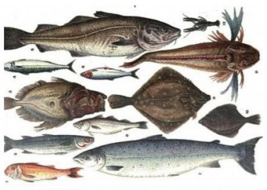 Mrs Beeton's Colour Illustration of Fish