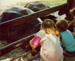 Children viewing the large Galapagos tortoises