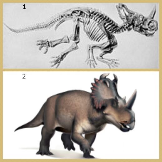 1.  Centrosaurus Skeleton 2.  Centrosaurus Dinosaur