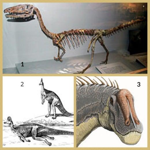 1. Coelophysis Dinosaur Skeleton 2. Corythosaurus Dinosaur 3. Dicreosaurus Dinosaur Head