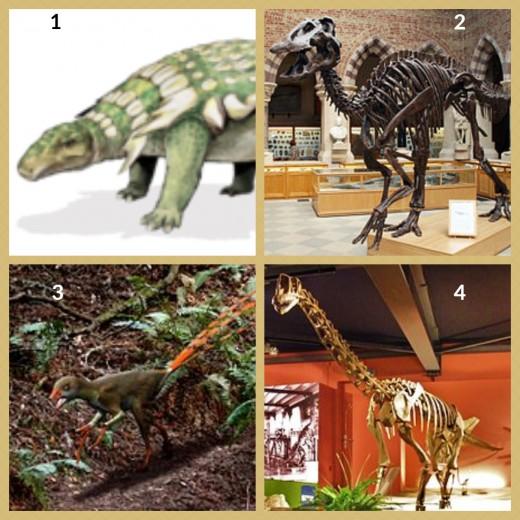 1. Edmontonia Dinosaur 2. Edmontosaurus Dinosaur 3. Epidexipteryx Dinosaur 4. Europasaurus Dinosaur (reconstructed skeleton)