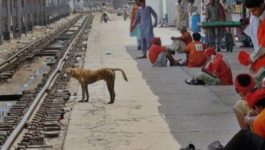 Stray dog at Railway Station